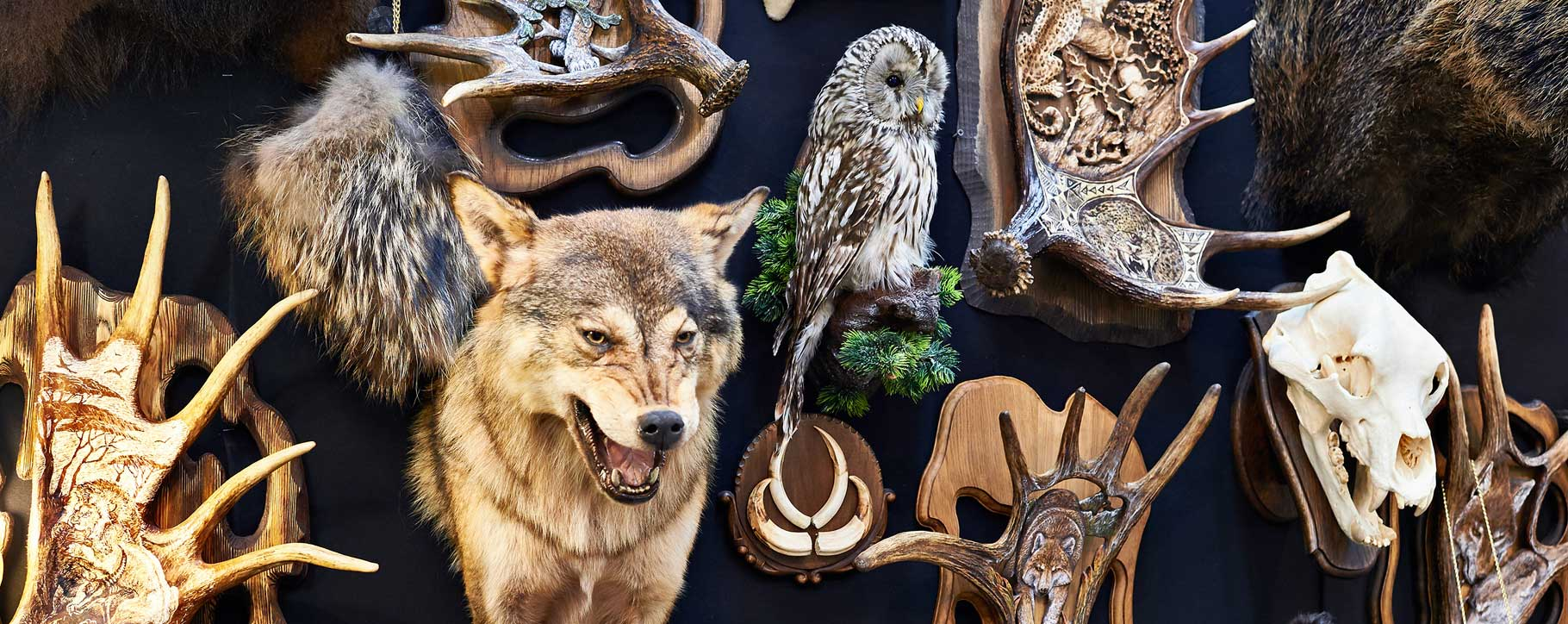 Taxidermy Restoration, Cleaning - Animals