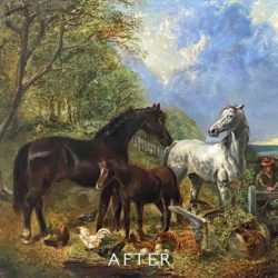 horses after cleaning